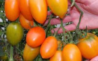 Сорт банан красный (томат): отзывы и особенности