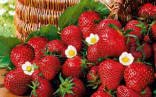 Клубника кимберли: описание сорта, фото, отзывы садоводов