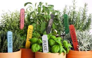 Пряные травы для огорода: фото с названиями