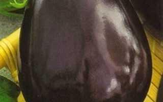 Баклажан Бычий лоб: описание, фото, отзывы