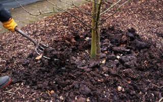Полив деревьев осенью (осенний): сроки — когда поливать?