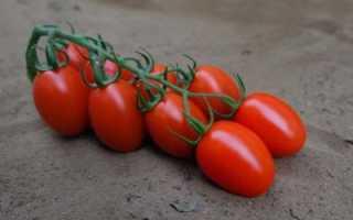 Томат сибирская тройка: отзывы, характеристика, особенности выращивания, фото
