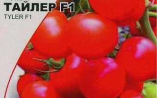 Томат Тайлер F1 описание гибридного сорта помидоров