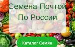 Томаты сибирской селекции для открытого грунта: ранние, низкорослые