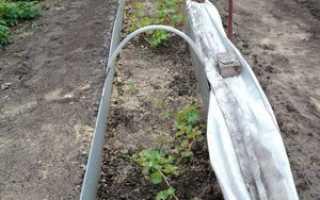 Как укрыть виноград на зиму в Сибири: особенности, методы от опытных садоводов