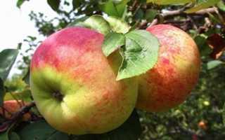 Сорт яблони Орловим: фото, отзывы, описание, характеристики