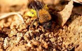 Земляные пчёлы как избавиться, Мои домашние питомцы