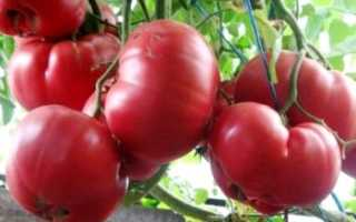 Томат Король Гигантов: характеристика, описание сорта с фото и видео, отзывы, урожайность