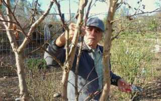 Как и когда правильно обрезать плодовые деревья