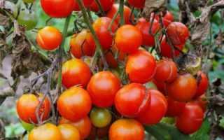 Чем обработать землю от фитофторы: особенности и рекомендации