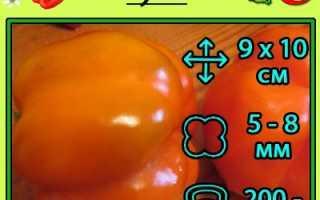Перец Оранжевое чудо — описание, отзывы, похожие сорта оранжевого перца