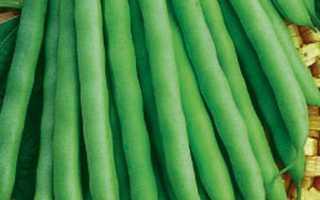 Фасоль Зеленый гигант: описание, фото, отзывы