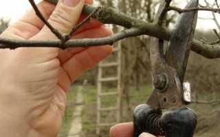 Как обрезать карликовые яблони: инструкция с фото