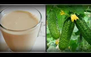 Йод для огурцов с молоком: подкормка и обработка