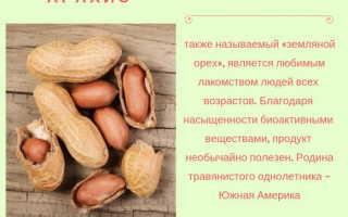Арахис: польза и вред для организма человека — Популярно о здоровье