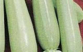 Кабачок Заячье ушко: описание, фото, отзывы