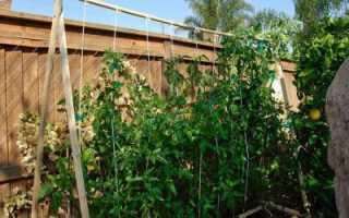 Томаты Райское наслаждение: отзывы, описание, условия выращивания, урожайность
