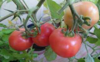 Гибрид томата «Подарок женщине F1»: фото, отзывы, описание, характеристика, урожайность