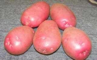Картофель, сорт Любава: описание сорта и отзывы