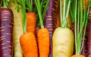 Лучшие сорта моркови для Подмосковья: описание, фото