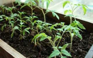 Томат Генерал f1: описание сорта и секреты выращивания