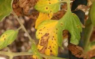 Почему желтеют листья у помидоров в теплице, основные причины пожелтения