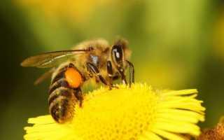 Окситетрациклин для пчел: инструкция по примененению