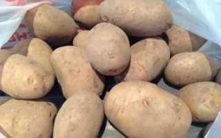 Картофель — Леди Клер — (14 фото): описание сорта и характеристика, отзывы