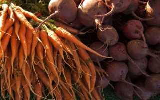 Как хранить морковь и свеклу зимой: в погребе, подвале, квартире