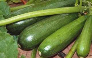 Чем характеризуется и как посадить кабачок Аэронавт семенами в теплицу?