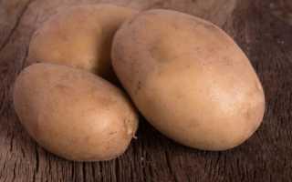 Картофель — Вектор — (27 фото): характеристика белорусского овоща и описание сорта, отзывы