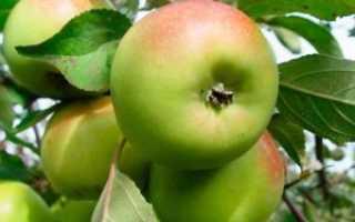 Подготовка яблонь к зиме: как укрыть и утеплить, пошаговое руководство с фото