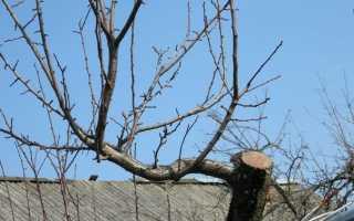 Как правильно обрезать старую яблоню осенью: схема, видео