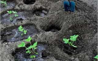 Посадка клубники осенью в открытый грунт, когда и как правильно посадить