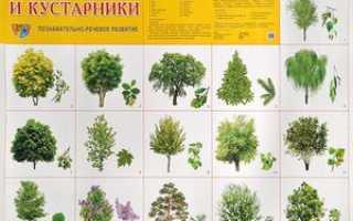 Виды деревьев: какие растут в России и Москве, их названия, описание и особенности