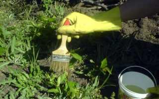 Уничтожаем сорняки на огороде народными способами, видео
