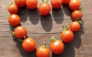 11 лучших сортов томатов для теплицы и открытого грунта – рейтинг от наших читателей, На грядке ()