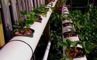 Как посадить и вырастить клубнику в ПВХ трубах горизонтально: инструкция