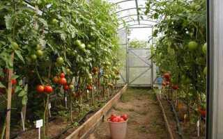 Сорта помидор: 19 лучших для теплицы из поликарбоната