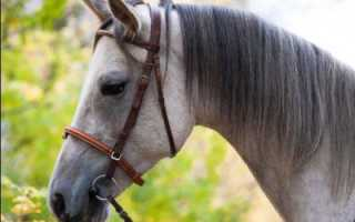Терская порода лошадей: описание, характеристика, оценка экстерьера