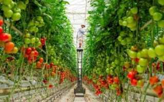 Кистевые томаты: лучшие сорта, названия, описание с фото, правила ухода и урожайность