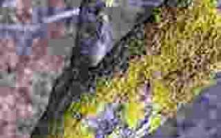 Борьба с лишайниками и мхом на плодовых деревьях, ЧАСТНЫЙ ДОМ