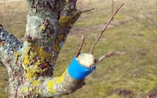 Окулировка: суть метода и польза для плодового дерева, как сделать прививку глазком на почку