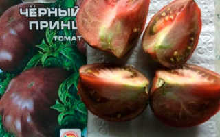Томат Черный принц: вкусная экзотика