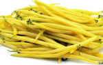 Фасоль — Масляный король — (10 фото): описание и выращивание вьющегося сорта, уход и отзывы