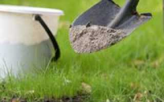 Подкормка сливы весной: чем подкормить сливу, как и когда правильнее удобрять