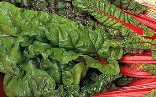 Свекольная ботва — заготовка на зиму, маринованные листья и ботва видео