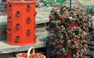 Секреты огородников: выращивание клубники в бочке