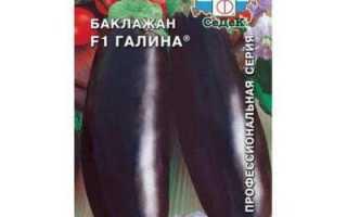 Баклажаны Галина f1: отзывы и описание сорта