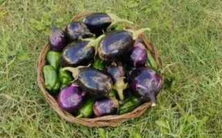 Как выбрать баклажаны без семечек и прожилок, Видео